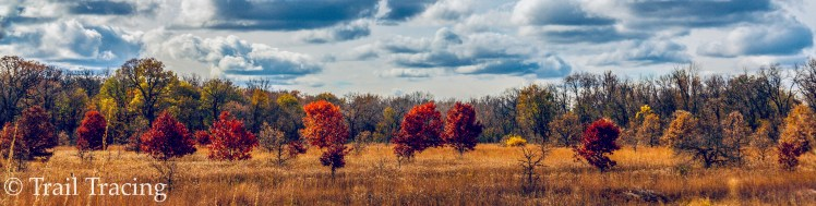 Ryerson Woods Fall Panorama