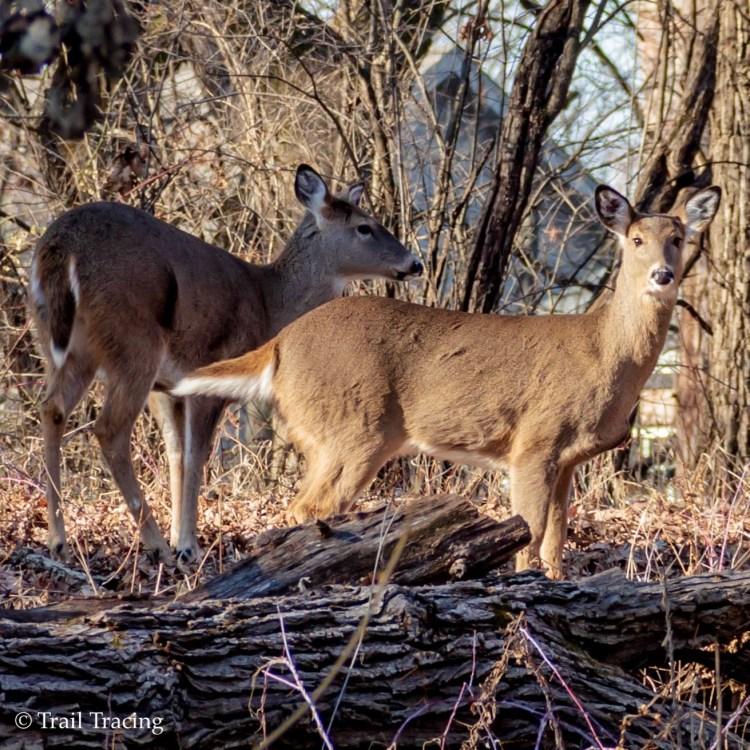 Deer Grove East Deer