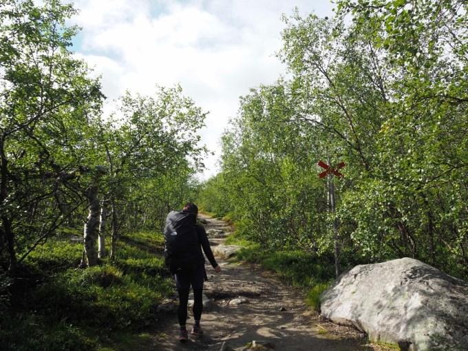 歩き始めはこのような感じ。歩き易い道が続く。