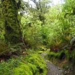 雄大な山々と苔生す原生林 ニュージーランド ルートバーン・グリーンストーン・トラック (3)