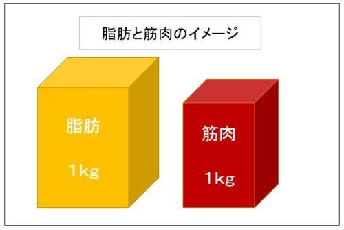 脂肪と筋肉のイメージ