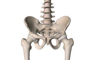 骨盤帯,歪み,安定性,理論,セミナー