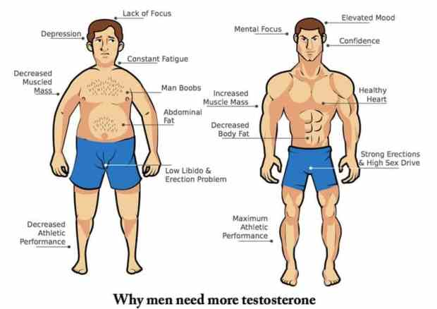 increase testosterone man boobs