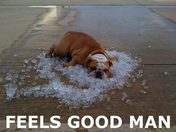here-comes-another-summer-of-air-conditioned-bliss-funny-dog-picture