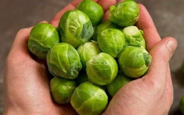 brussels sprouts superfood