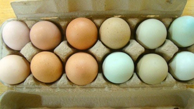 pastured eggs superfood