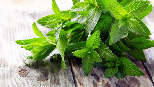 peppermint superfood
