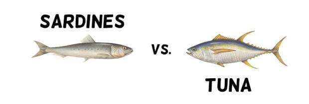 sardines vs tuna