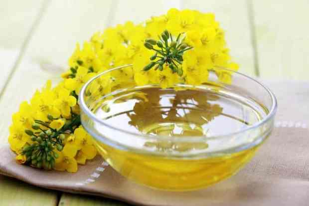 what is canola oil