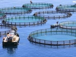 Aquaculture sector