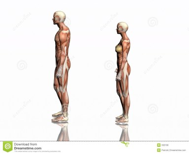 Bild tagen från http://www.dreamstime.com/stock-photo-anatomy-man-woman-image332160