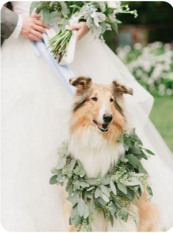 mariage animaux