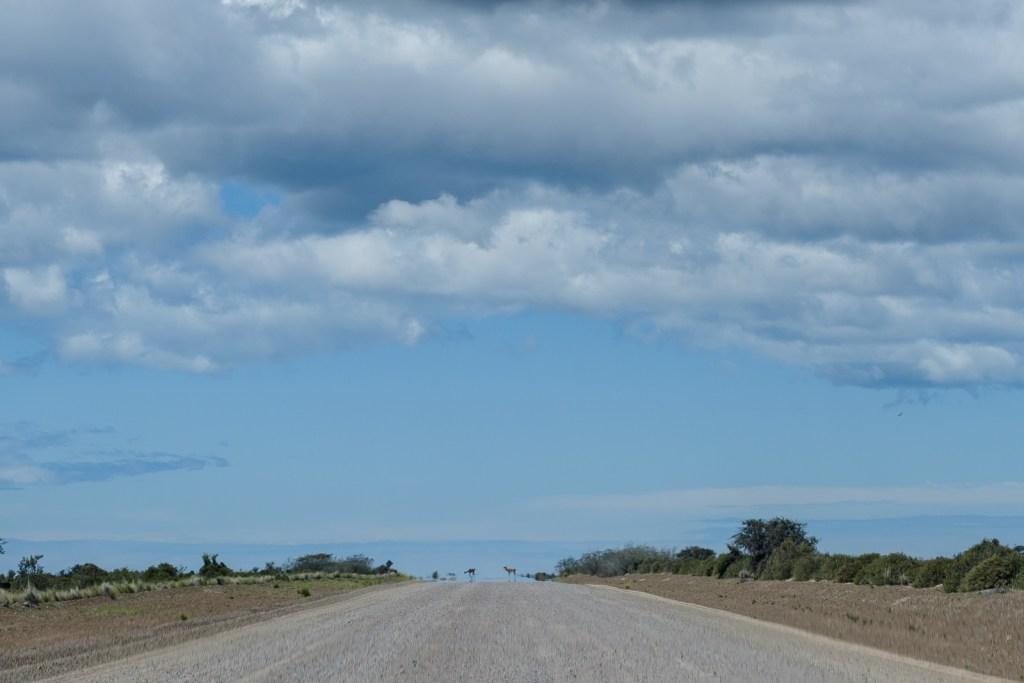 route péninsule valdes patagonie
