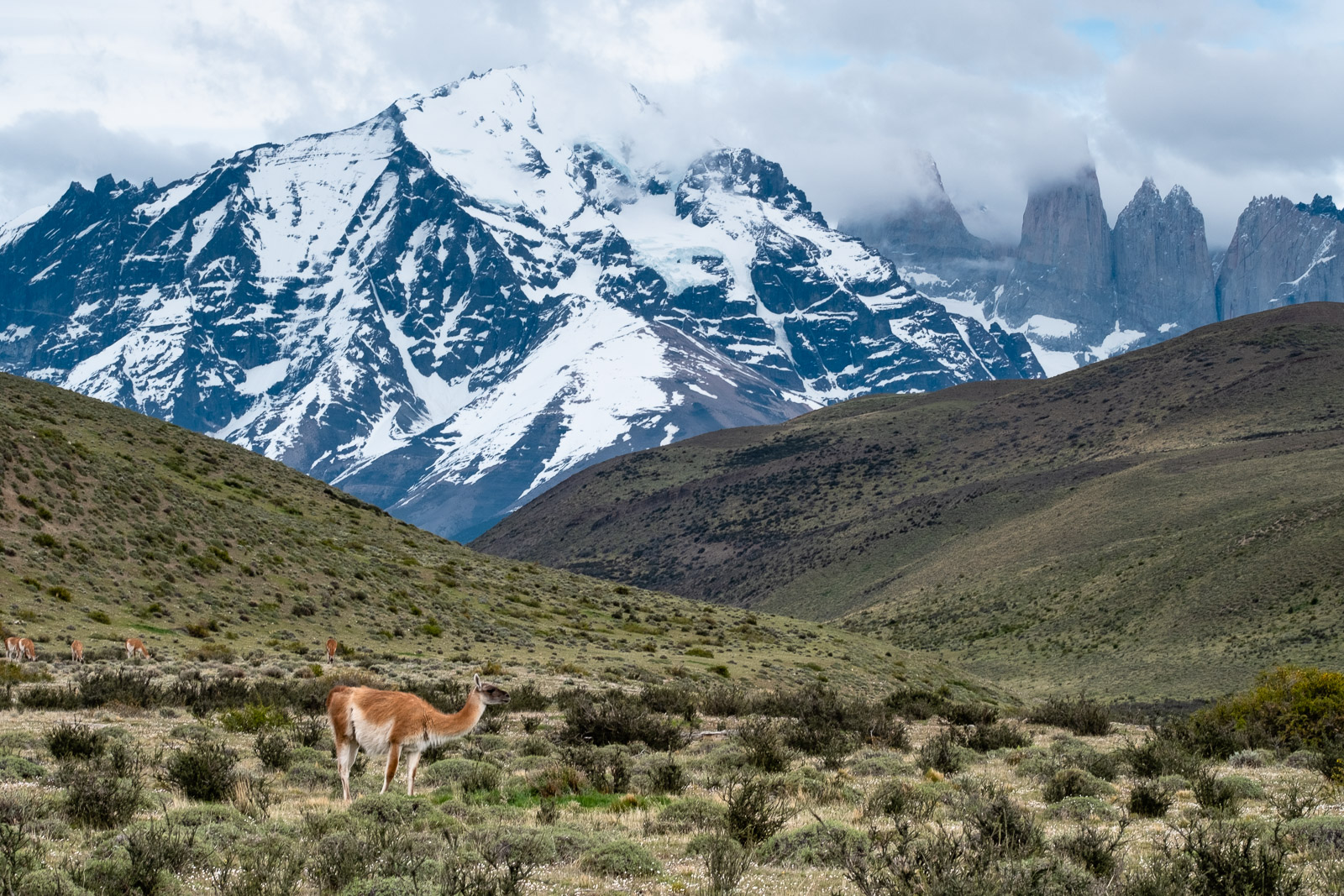 parc national chili torres del paine patagonie guanaco