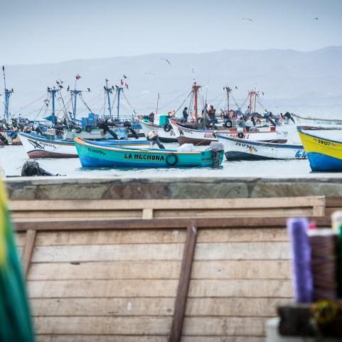 Paracas au pérou