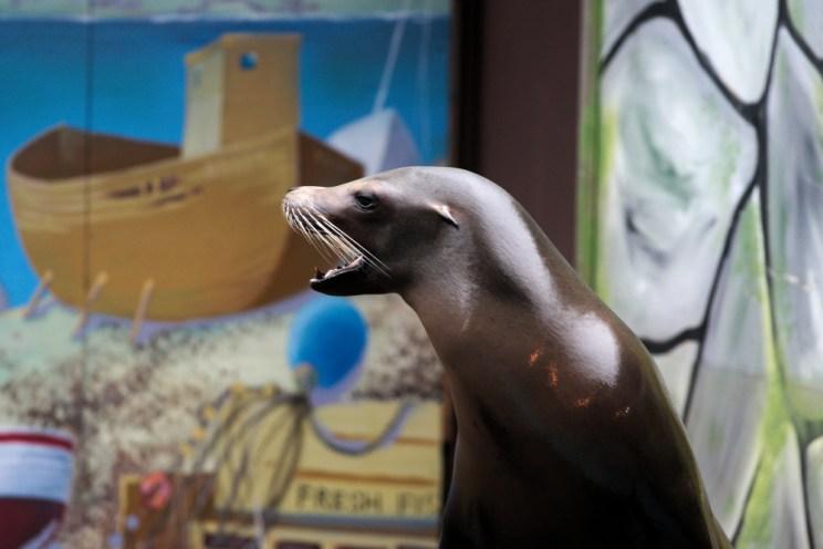 Sea lion4