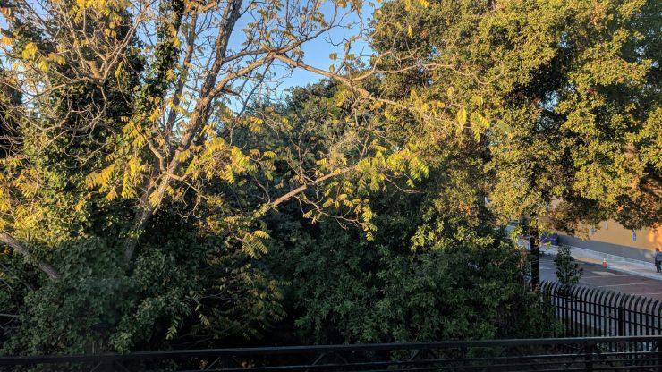 Photo of trees at San Mateo Caltrain station