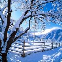 Winter: Cookies and Chocolate Season :x