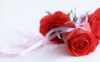 Red-Flowers-HD-Wallpapers-images-pictures