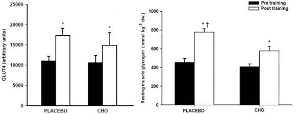 Koncentrationen av GLUT-4 och muskelglykogen i placebo och kolhydratsgruppen