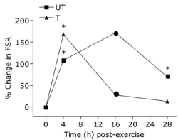 Höjning av proteinsyntesen i ett tränat ben jämfört med i ett otränat ben.