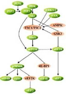 Cellsignaleringsvägar utan iblandning från hormon