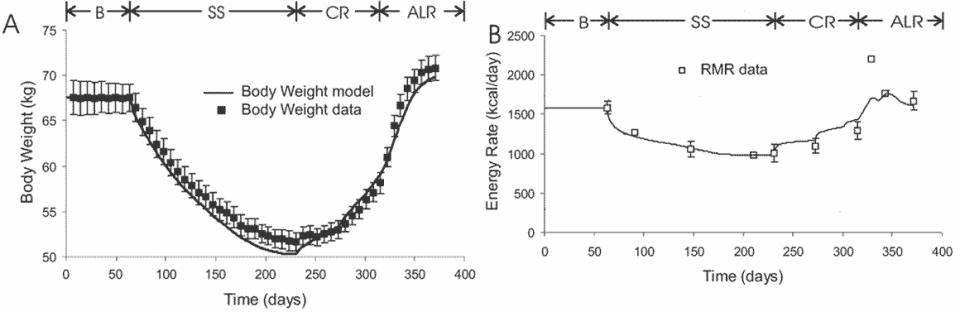 Grafen visar viktkurva och viloenergiförbrukning (RMR) för deltagarna i keys semi-starvation studie. Det man kan se är att efter en tydlig nedgång i viloförbrukning i början på interventionen så höll sig energiförbrukningen i vila ganska konstant för deltagarna trots en fortsatt viktnedgång. B=utgångsläge, deltagarna fick äta för energibalans. SS=dietperioden. CR=Kontrollerad återätningsperiod. ALR=Försökspersonerna fick äta fritt