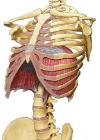 kramp i musklerna mellan revbenen