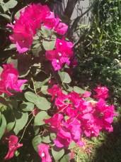 Loving garden colour
