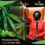 Marijuana Being Legal In New York