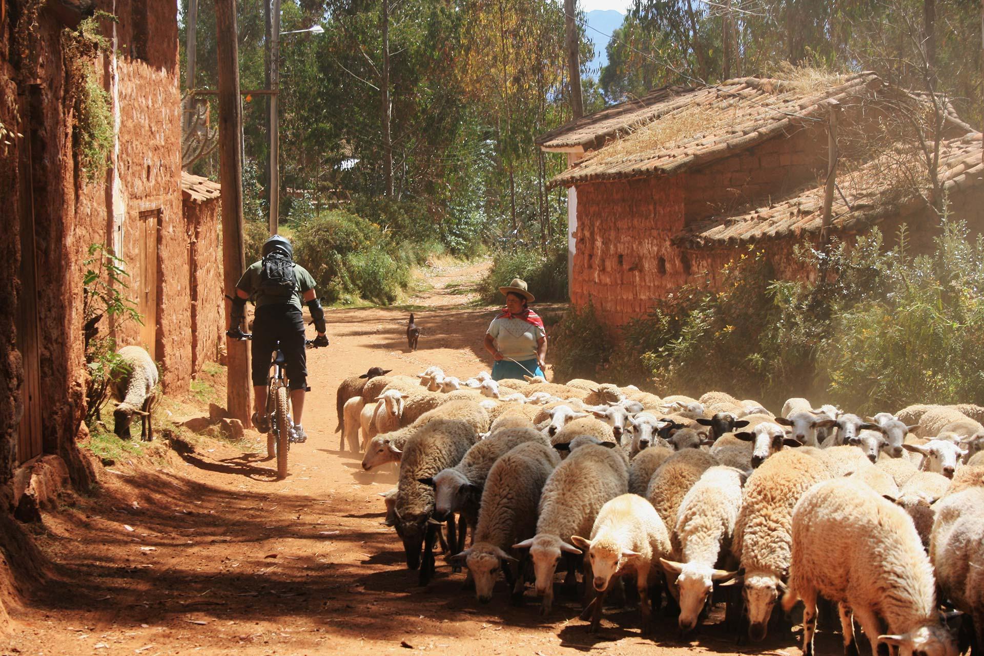Voyage sur mesure au Pérou avec Transandes