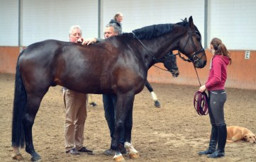 Volker Eubel and his physiotherapist with one of the horses.