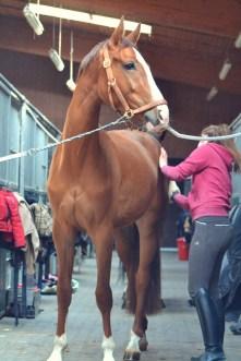 Volker Eubel Horses (1)