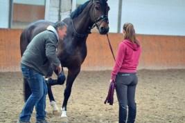 Volker Eubel Horses (12)