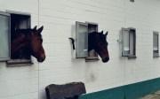 Volker Eubel Horses (13)