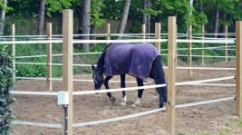 Volker Eubel Horses (15)