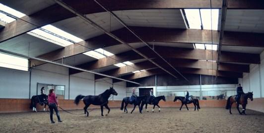 Volker Eubel Horses (17)