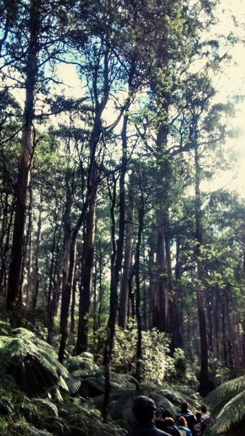 Toolangi State Park 6