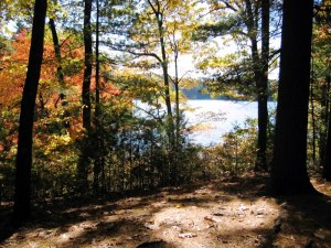 The view from Thoreau's cabin. Photograph by Barry M. Andrews