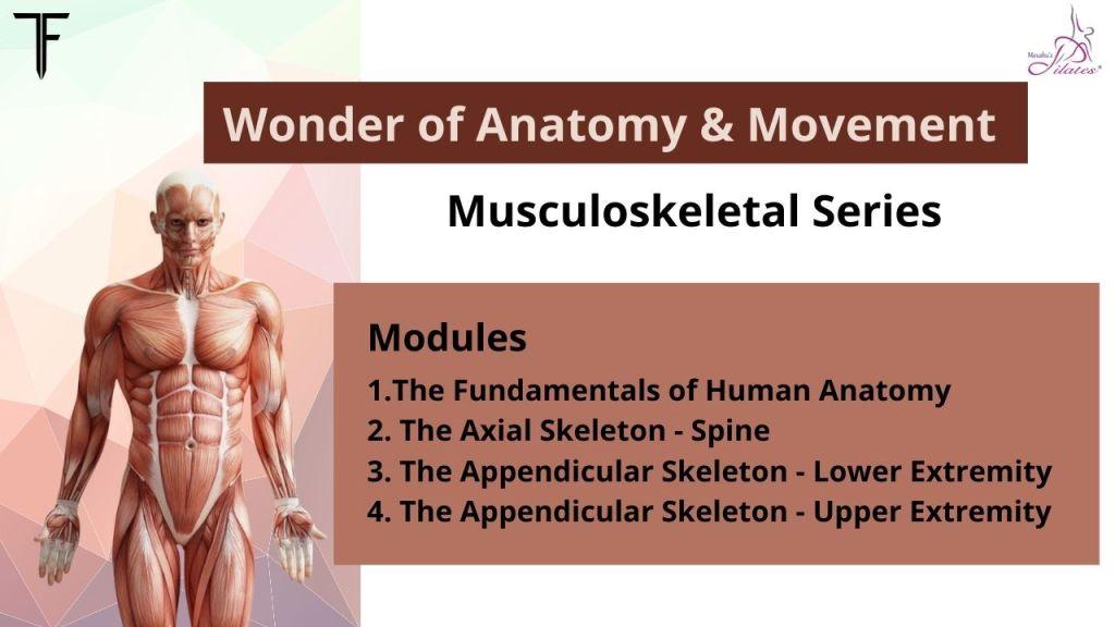 Musculoskeletal Series