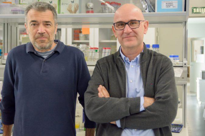 """Francisco Antequera y Luis Quintales, responsables de la investigación publicada en """"Genome Research"""". Foto: Sergio Manzano"""