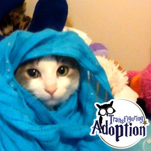 cat-costume-toys-adoption-foster-care-hogwarts