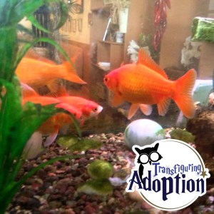 fish-transfiguring-adoption-water-hogwarts