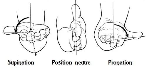supination neutre pronation