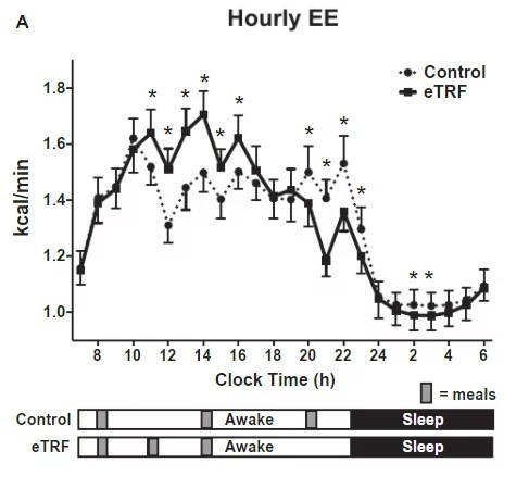 Dépense énergetique horaire du jeûne intermittent (fasting) vs non jeûne