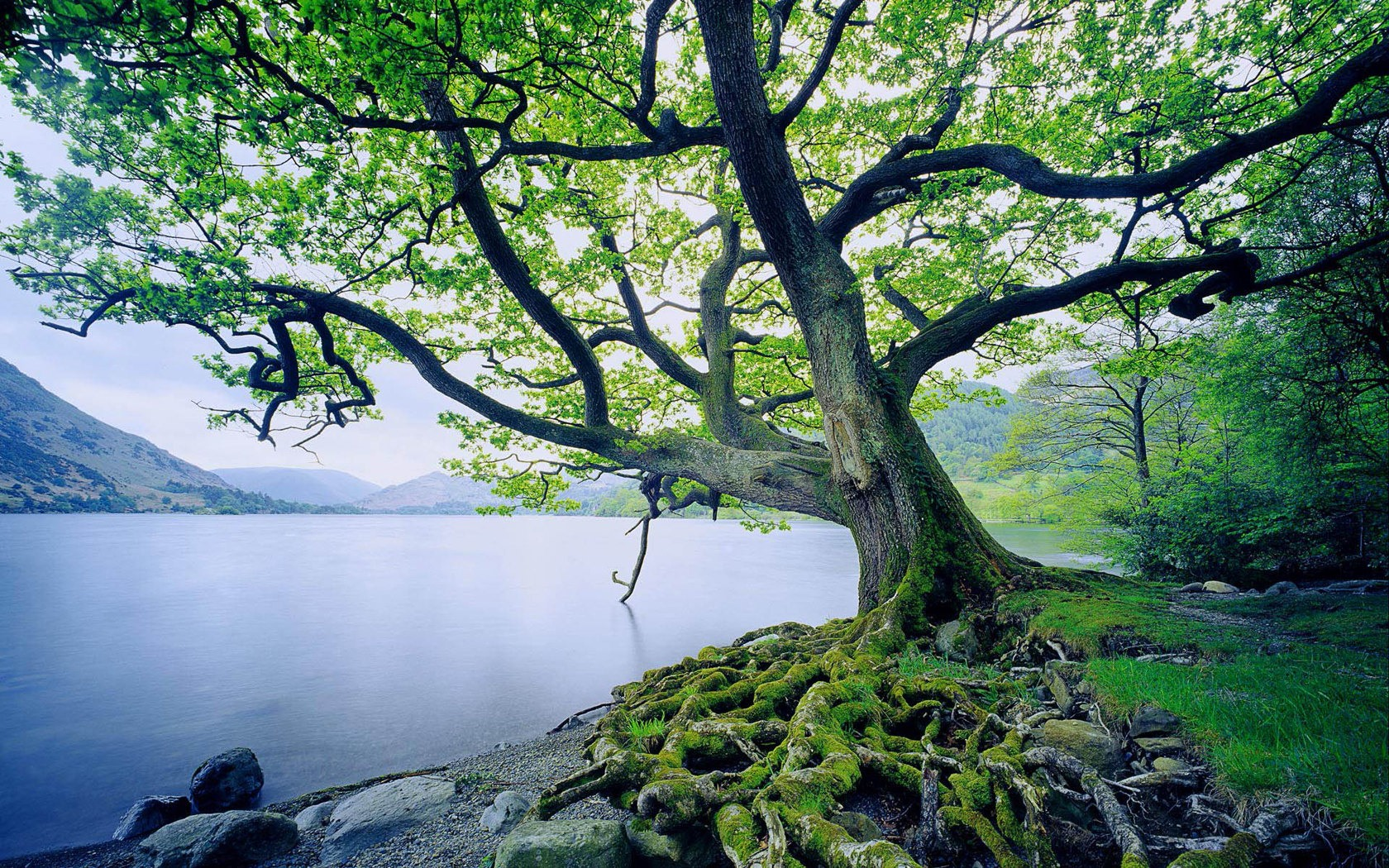 https://i2.wp.com/transformationaltrend.com/wp-content/uploads/2013/09/beautiful-tree-and-river.jpg