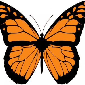 an example of transformation fitness mascot - a butterfly