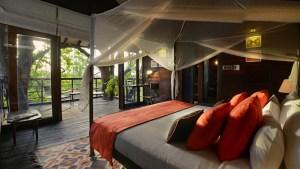 Tree Lodge Room in Madhya Pradesh, India