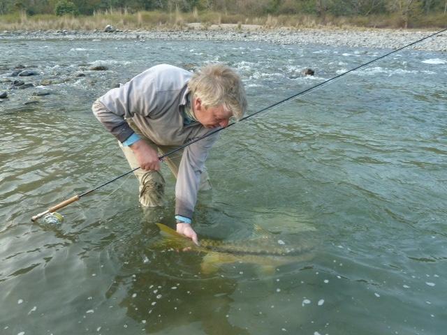 Mahseer Fly fishing India