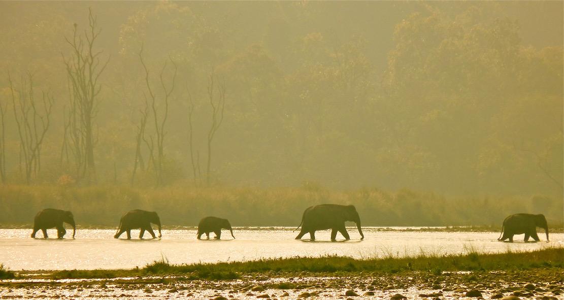 Ramganga river crossing India